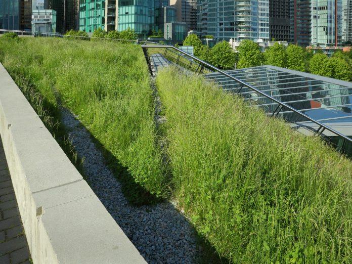 Nashville Music City Center's green roof